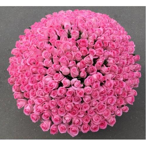 Купить на заказ 501  роза с доставкой в Шардаре