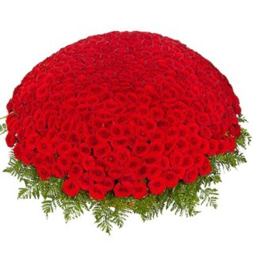 Купить на заказ 301  роза с доставкой в Шардаре